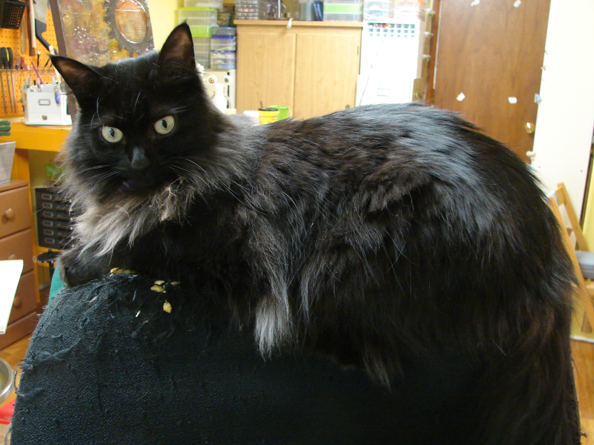 Behind The Scenes At Trilby Works My Fluffy Black Cat